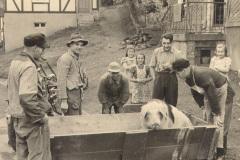 Schlachtung-an-der-Heuslingstrasse