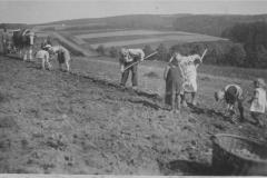 auf-dem-Kartoffelfeld-sw